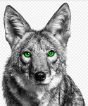 lonecoyote Avatar