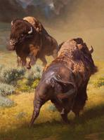 Bison Bulls Fighting.jpg